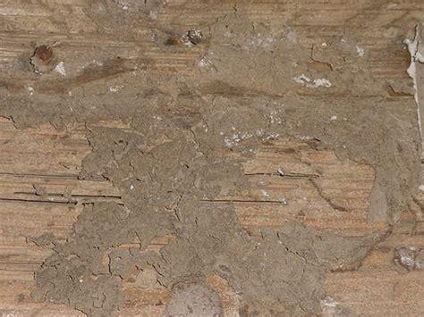 Protecting Hardwood Floors pre construction termite control get rid of termites