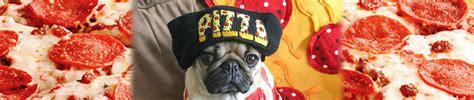 srsly guise pug gif pugcity pugcity