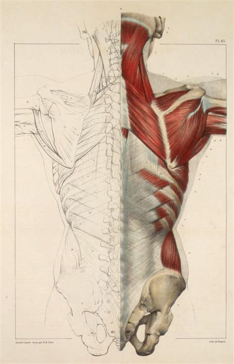 Drawing Anatomy by Inspirational Artworks Anatomy Images Cg Anatomy