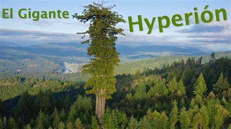 hyperion los cantos de el misterioso hyperi 243 n el 225 rbol m 225 s alto del mundo youtube