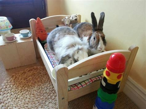 bunny beds the buns in their ikea bedroom rabbits pinterest