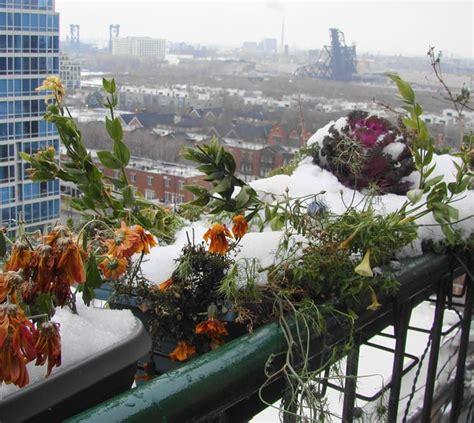 orto nel terrazzo orto nel balcone orto in terrazzo orto sul balcone