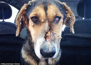 tick shoo for dogs at point blank range in the and abandoned to nearly starve to has