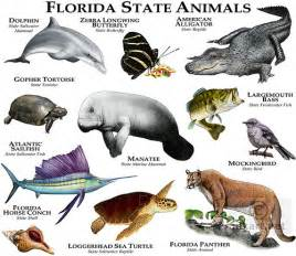 What Is The Maryland State Flower - florida state animals fine art illustration of the