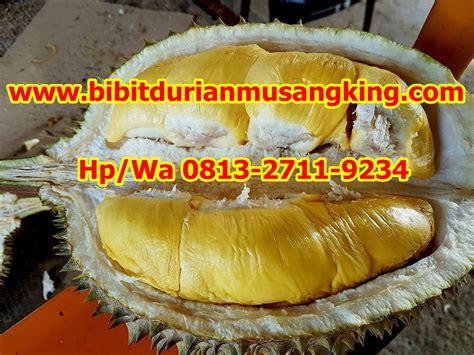 Harga Bibit Durian Musang King Magelang bibit durian montong bibit durian unggul durian bawor