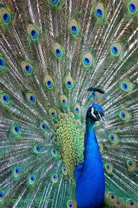 Kaos 3d Motif Binatang Hewan gambar haiwan berwarna warni kecantikan ciptaan ilahi