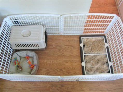 puppy using bathroom in crate 25 best ideas about puppy playpen on pinterest dog