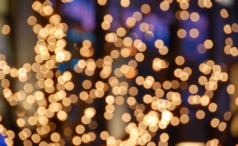 Beautiful Multi Colored Christmas Tree Lights #4: PP30170608-Evening-Treelights-Bokeh.jpg