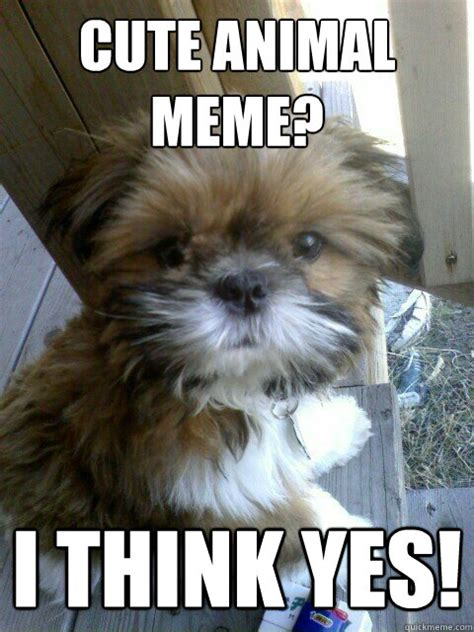 Cute Animals Memes - cute animal meme i think yes winner quickmeme