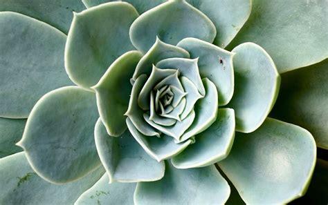 fiori simili alle margherite le geometrie delle piante e la successione di fibonacci