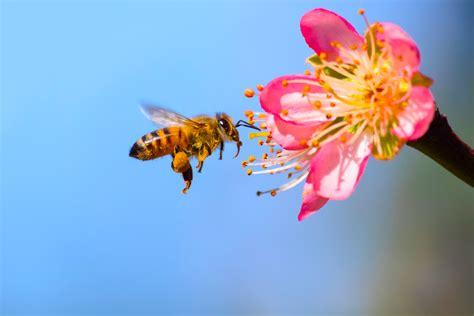 buzzed making  garden bee friendly