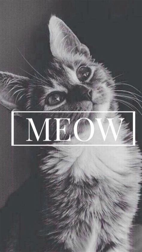 hipster tumblr oh lindo pinterest kitty cats if you like kitties that must be your ideal background