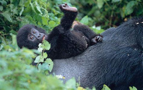 About Uganda | WWF