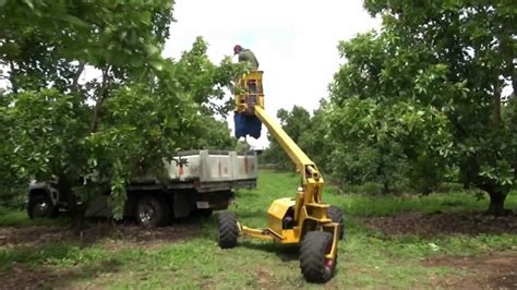 dawson v cherry tree machine picking avocados