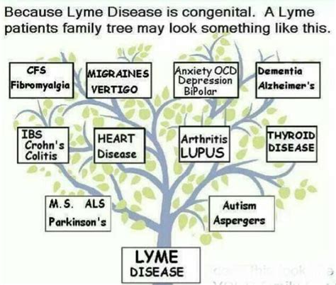 Lyme Disease Detox Diet by 17 Best Images About Healing With Nature On
