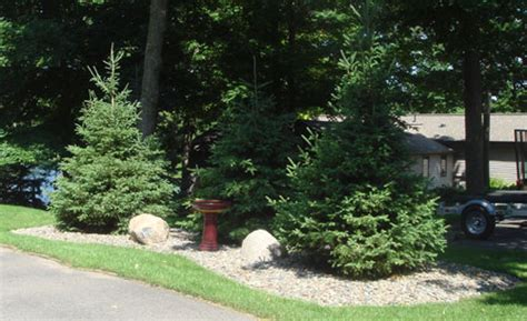 Evergreen Landscaping Ideas Landscaping Ideas For Landscaping Evergreen Trees