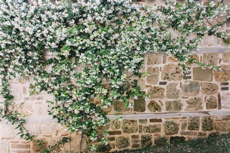 imagenes de rosas trepadoras plantas trepadoras con flor decogarden
