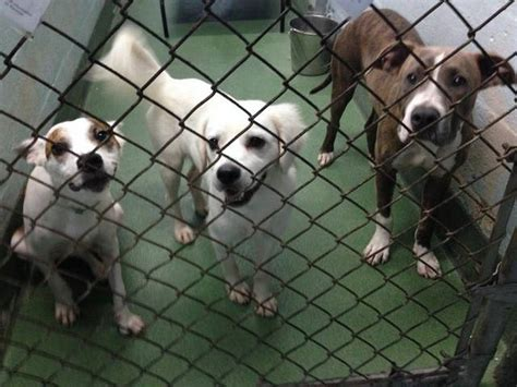 free puppies miami free spay and neuter for pets in low income homes the miami herald