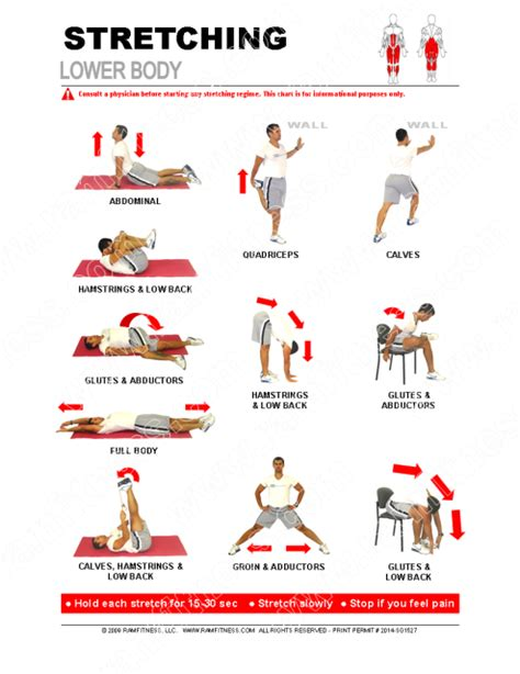 printable flexibility exercises printable stretching guides royalty free