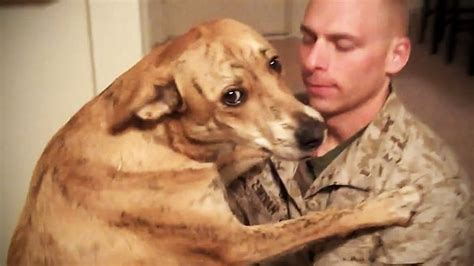dogs as pets dogs meet their owner after time try not to cry