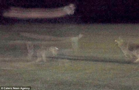 ghost puppy captures ghost in photo while on walk