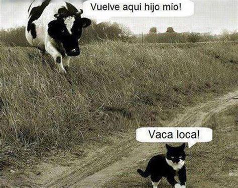 imagenes graciosas vacas imagenes de vacas graciosas