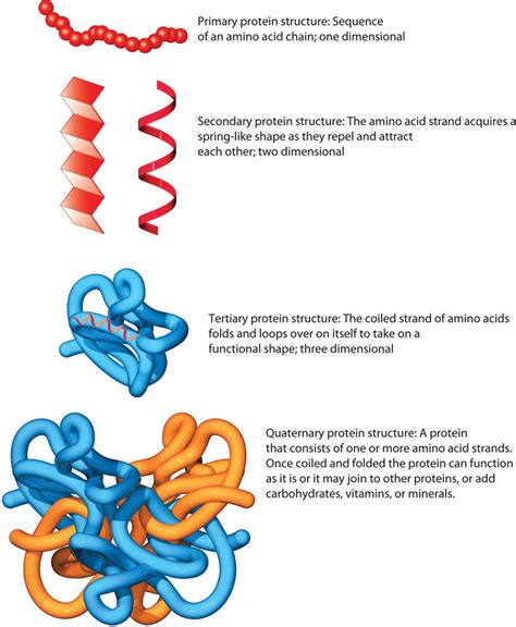 protein levels of structure defining protein
