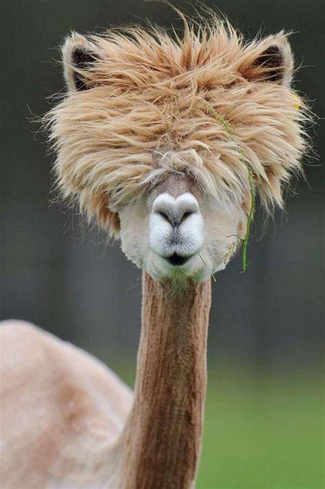 beautiful animals  natural hair    jealous