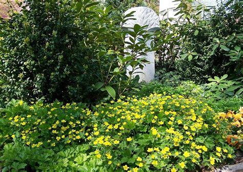 beetgestaltung pflegeleicht bodendecker pflanzen worauf kommt es an praktische tipps
