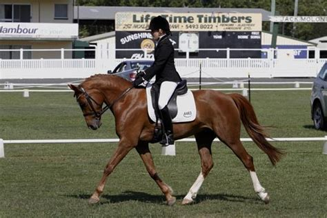 102 best images about dressage show attire on pinterest stunning pony dressage star top horse