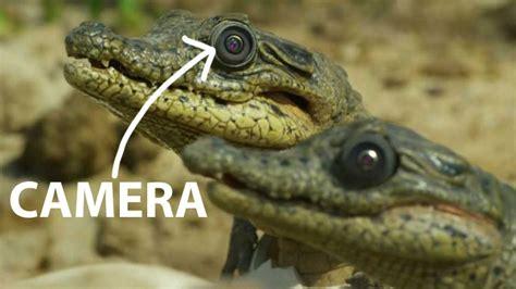film petualangan alam liar hewan kamera pembuat film film dokumenter alam liar