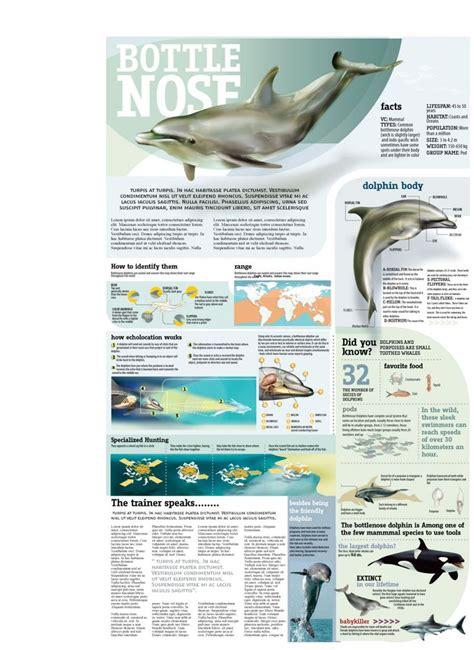 marine biologist description marine biologist description marine world