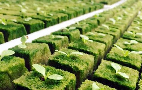 rockwool  hydroponics high tech gardening