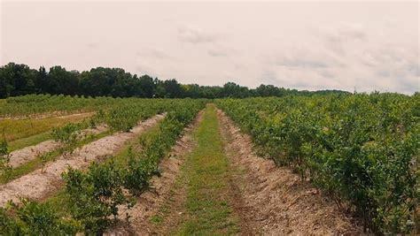 Persimmon Hill Farm Le Mo by Persimmon Hill Farm Le Missouri