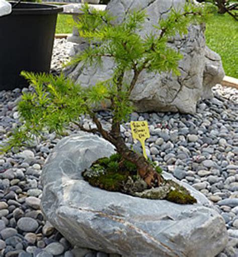 garten bonsai winterfest machen kleiner baum ganz gross gartenblog wyss