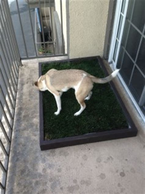 Dog Grass For Balcony by The Dog Grass Pad For Balcony Use Doggy Amp The City Los