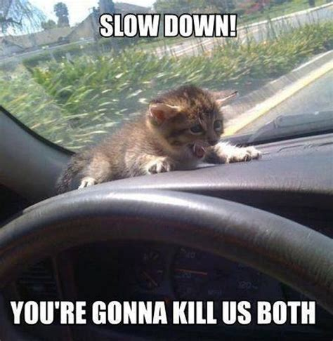 Scared Cat Meme - fantastically funny animal pictures 20 pics kill the hydra