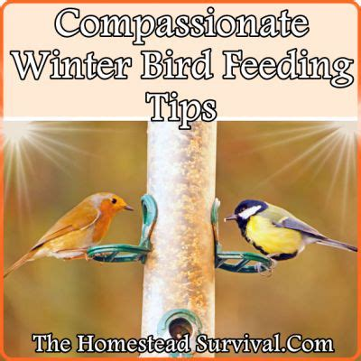 the homestead survival compassionate winter bird feeding