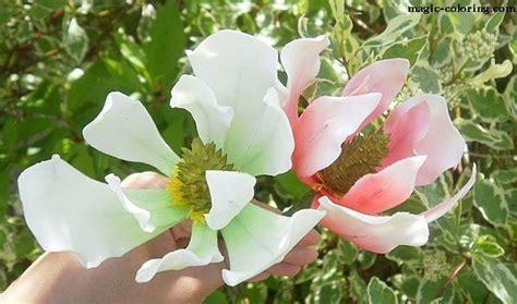 magic coloring magnolia flower template
