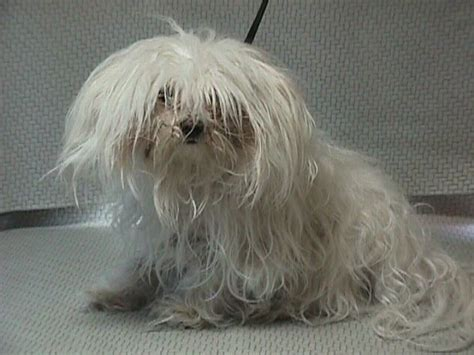 Matted Dogs by Matted Images