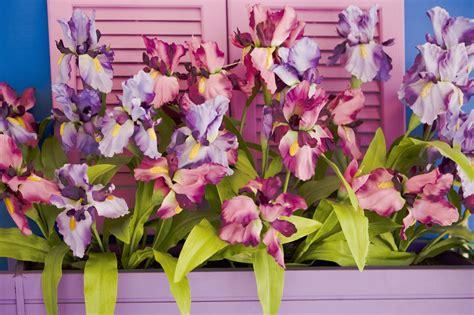 come coltivare le in vaso come coltivare le orchidee non sprecare