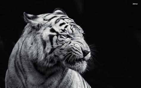 black and white portrait desktop background hd 1920x1200 black and white animal wallpaper wallpapersafari