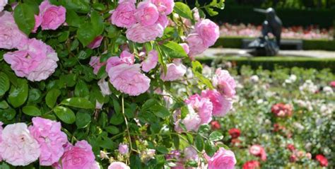Britzer Garten Wetter by Britzer Garten Aktivit 228 Ten Im Bei Sch 246 Nem Wetter