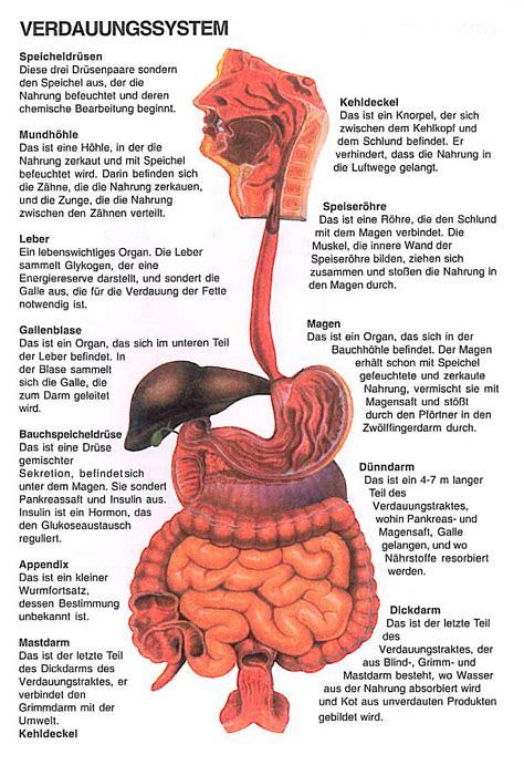 lange innere schamlippen bilder частини тіла німецькою спеціально для медиків dakad