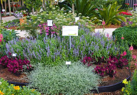 Cutting Flower Garden Small Space Cut Flower Garden Ideas Costa Farms