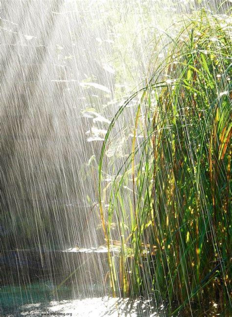 Rainy Summer by Summer