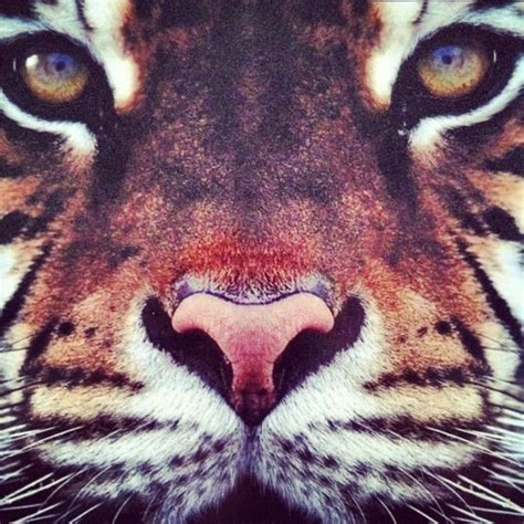 imagenes hipster tumblr animales animal face on tumblr