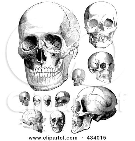 skull collage tattoo designs royalty free rf clipart illustration of a digital