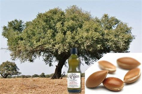 olio di argan alimentare olio di argan alimentare marocco food and drink of the