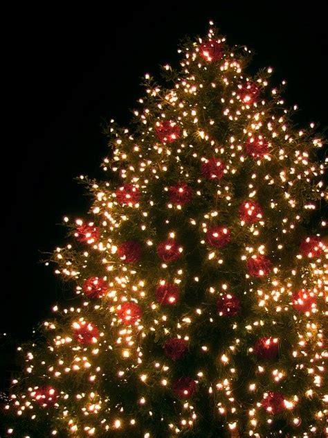 christmas fir tree lichterkette  photo  pixabay